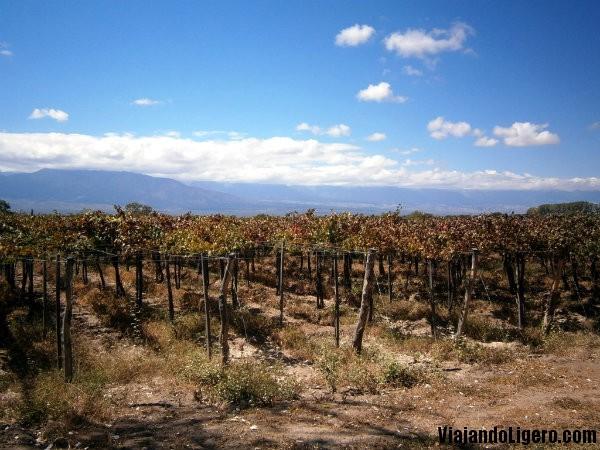 viñedos Cafayate