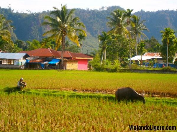Harau, Bukittinggi, Sumatra