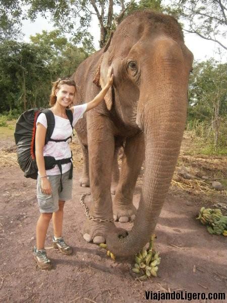 elefantes tad lo