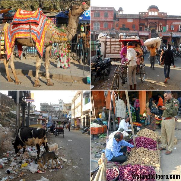 Jaipur, varios