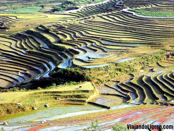 Más arrozales en Sapa