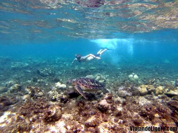 Erik nadando con una tortuga