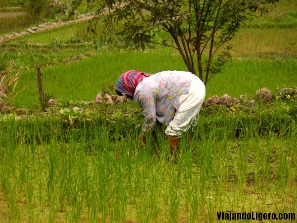mujer arroz