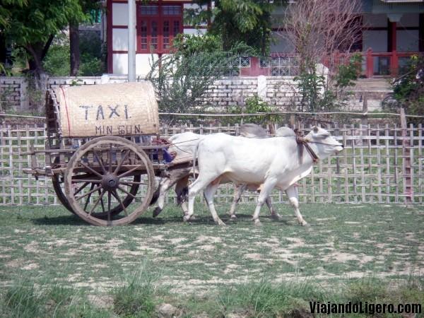 Buey-taxi