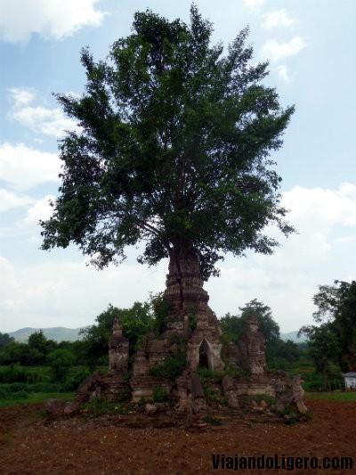 Árbol en Little Bagan